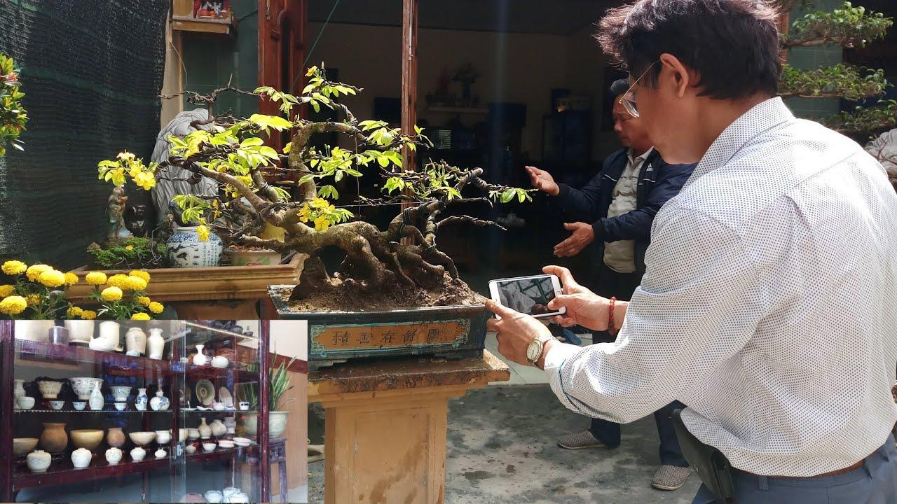 góc nhỏ đam mê mai vàng bonsai và cổ vật