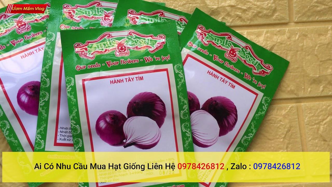 hạt giống hành tím | Purple onion seeds