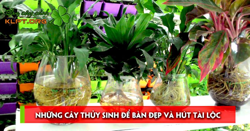 nhung-cay-thuy-sinh-de-ban-dep-va-hut-tai-loc