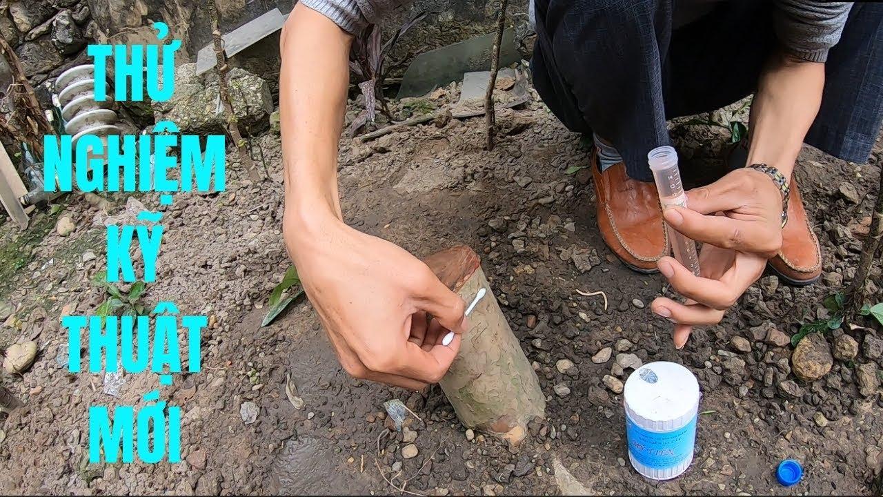 BShp-Làm thử nghiệm kỹ thuật cho cây phôi bonsai ra mầm theo ý muốn