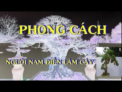 Bonsai TM. PHONG CÁCH NGƯỜI NAM ĐIỀN làm cây