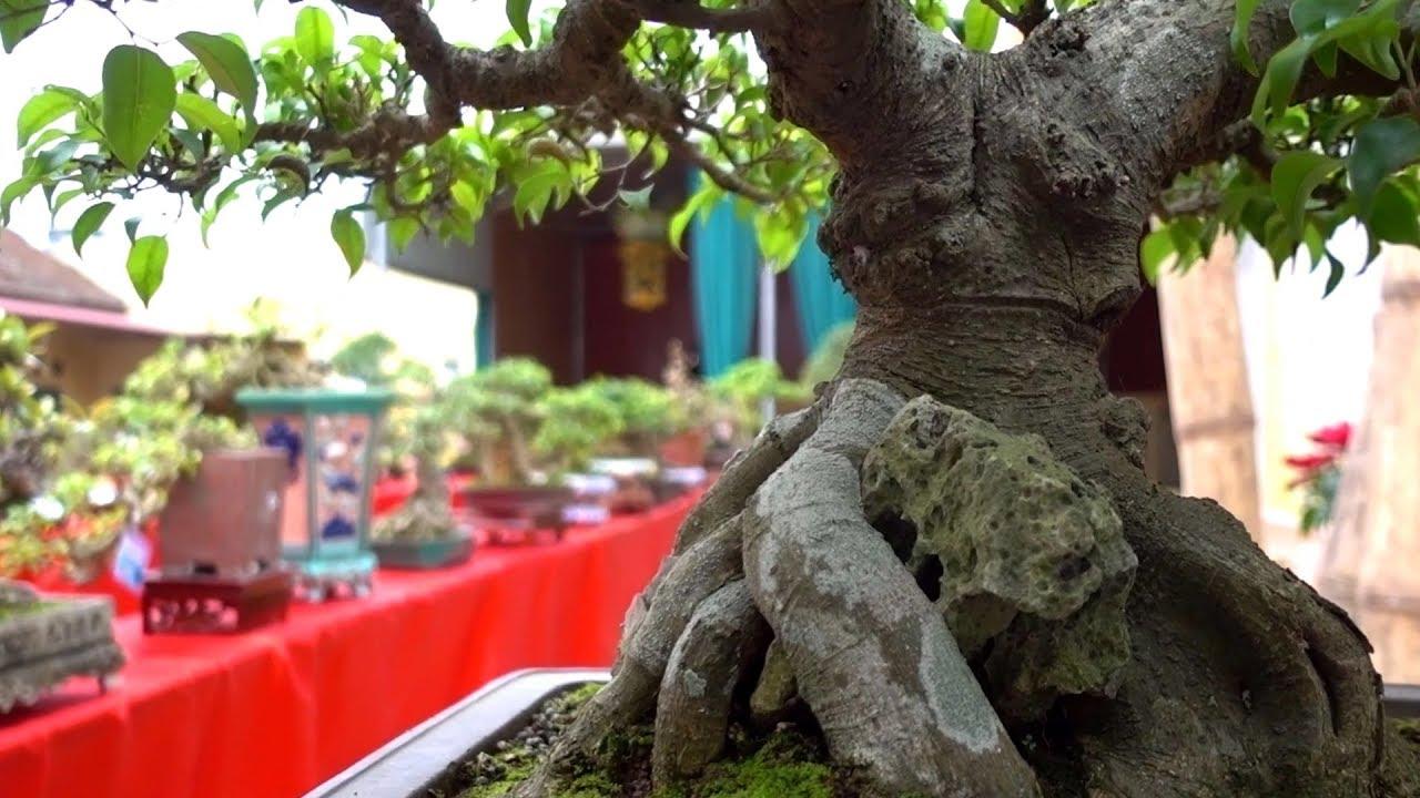 Bonsai nhỏ, lùn cây đẹp nhất, mini Bonsai