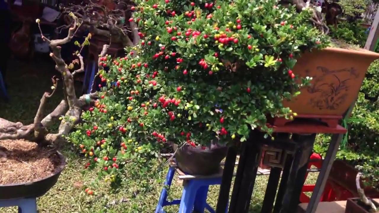 Bonsai tree - Phải nói là quá đẹp - BOSAI BINH DINH