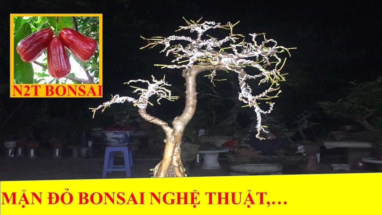 CÂY MẬN ĐỎ (ROI) BONSAI NGHỆ THUẬT