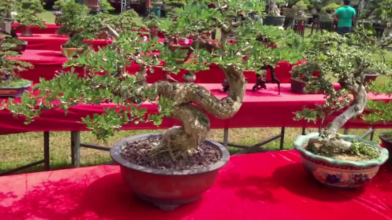 Các Tác phẩm xuất sắc của các nhà vườn tại Triển lãm - Bonsai Binh Dinh