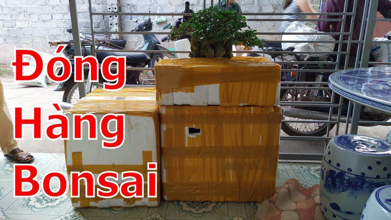 Cận cảnh đóng lô hàng bonsai gửi cho khách Hà Nội và TPHCM-BShp