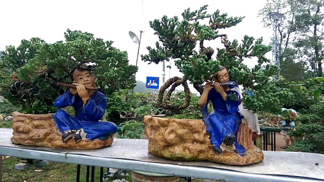 Cây trưng bày bày bán tại Cầu Ông Đô phần 1- Bonsai Binh Dinh