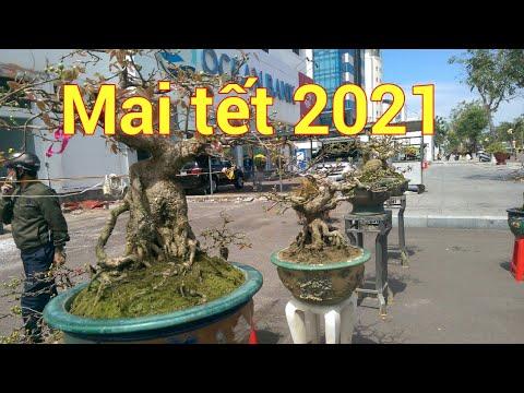 Dàn mai Bonsai bán tết tại Quy Nhơn 2021