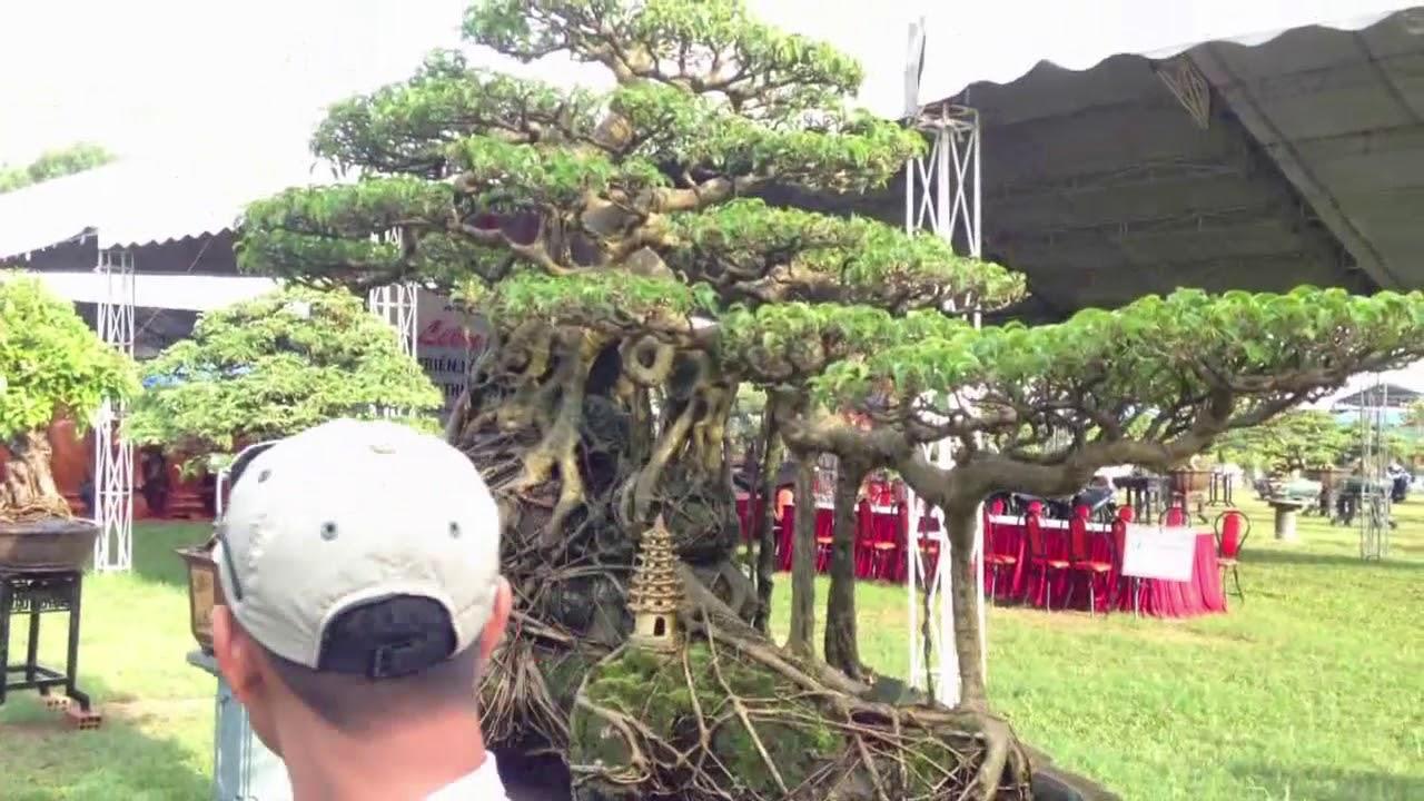 Đẹp ngất ngây nhìn mãi mãi không chán là những cây này - Bonsai Binh Dinh