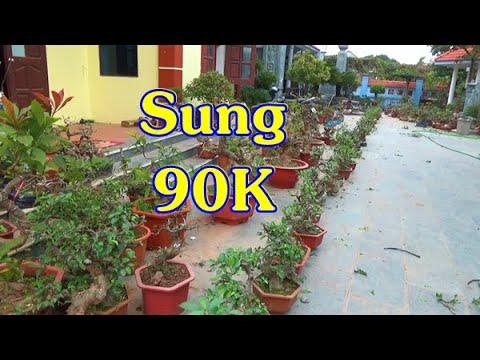 Giá sập sàn từ 20/1 đến 21/1  từ 50K - 90K, ĐT: 0337496058