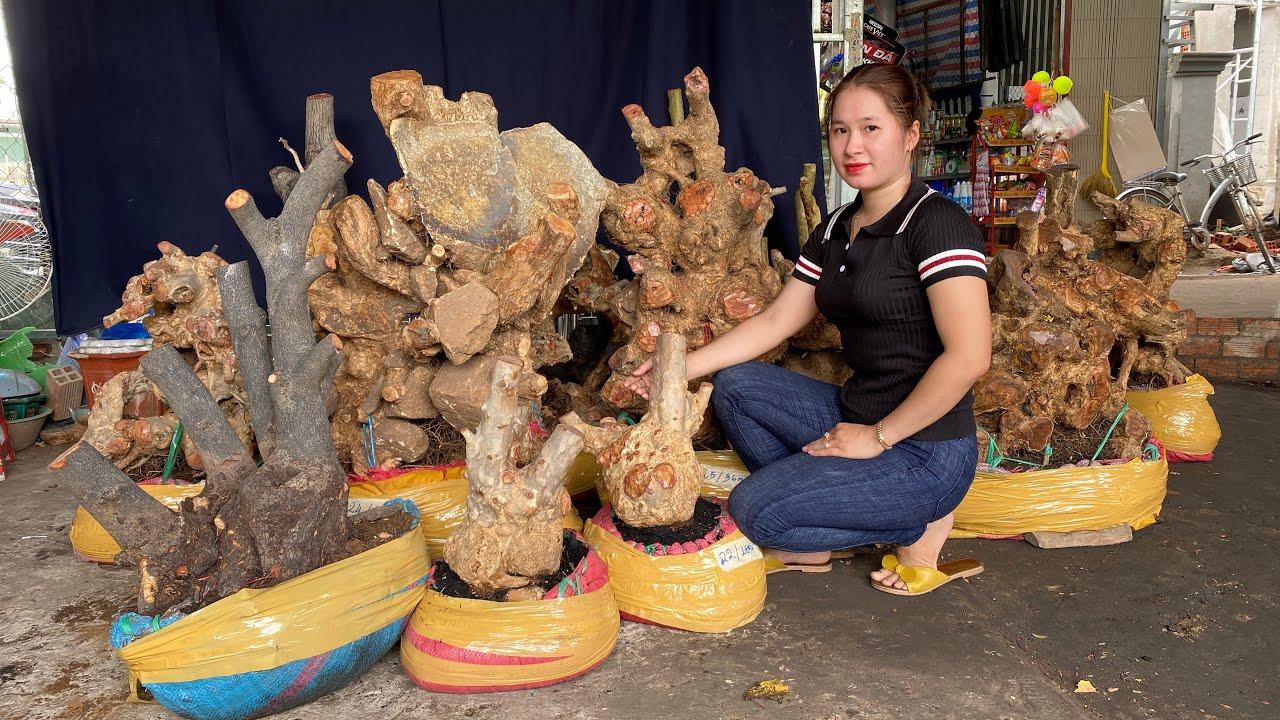 Giao lưu cây Thị - Tường Vy - Bằng Lăng - Ngũ Sắc ngày 14/09 Thúy An