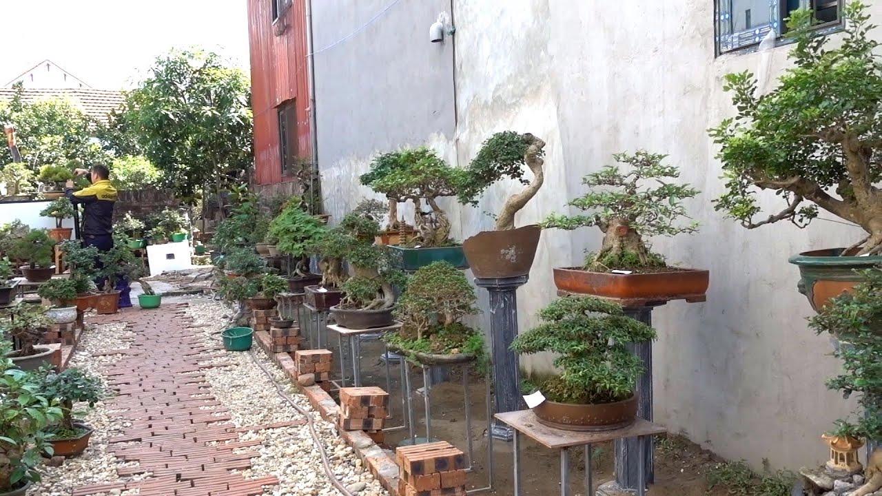Hàng thi đấu triển lãm giá hợp lý tại vườn cây cảnh đẹp - price of bonsai tree