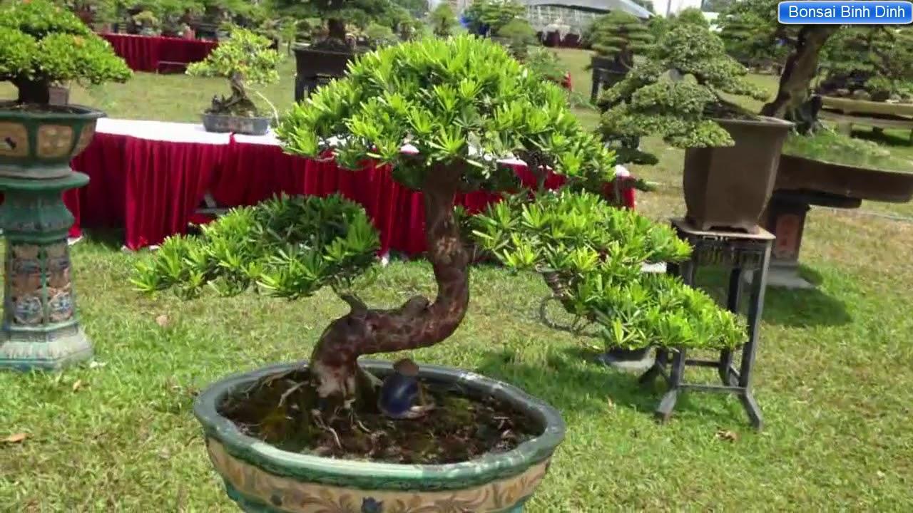 Hội tụ cây đẹp tại Triển lãm Bonsai Binh Dinh