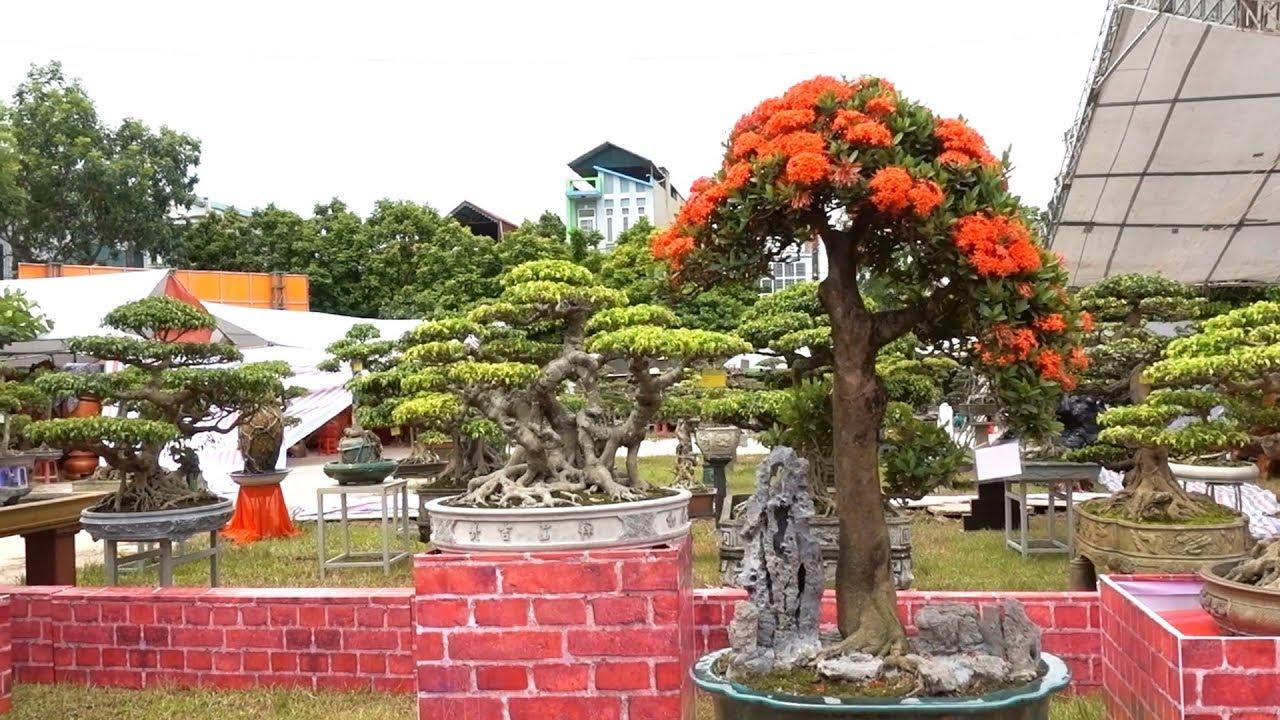 Không có cây này thì không phải là Hải Phòng, những cây lạ nhất triển lãm - bonsai exhibition