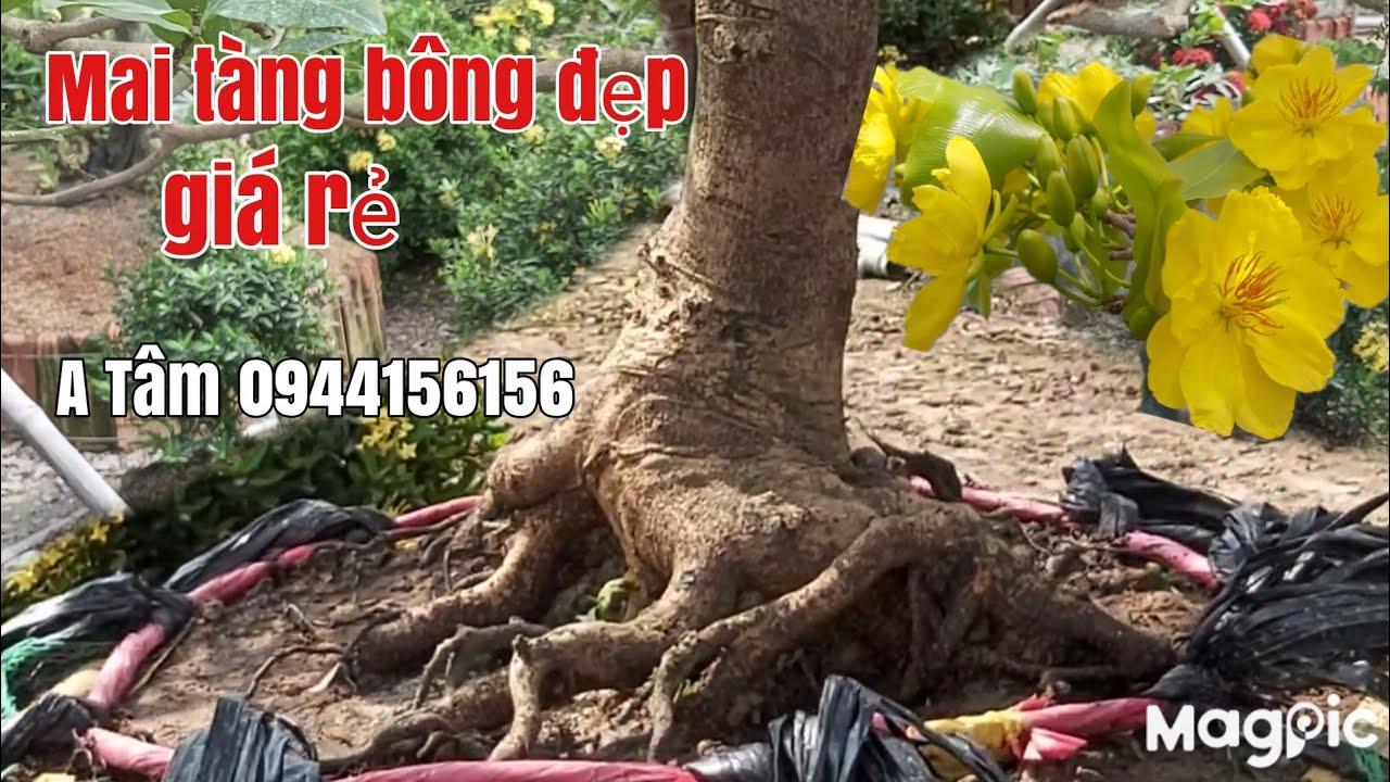 Lô Mau tàng một cốt đế đẹp giá rẻ gặp A Tâm 0944156156 Đồng Tháp