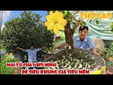 Mai XÙ CHẢY BÍT MÌNH tàng thông 1 cốt ở Chợ Gạo 0367067384