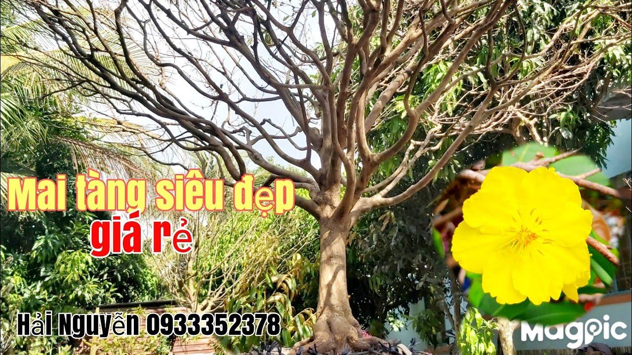 Mai tàng siêu đẹp giá rẻ gặp A Hải Nguyễn 0933352378 phong Điền TP Cần Thơ