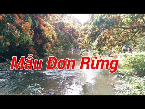 Mẫu đơn rừng tại suối Tà Má, Hà Ri, Vĩnh Hiệp, Vĩnh Thạnh