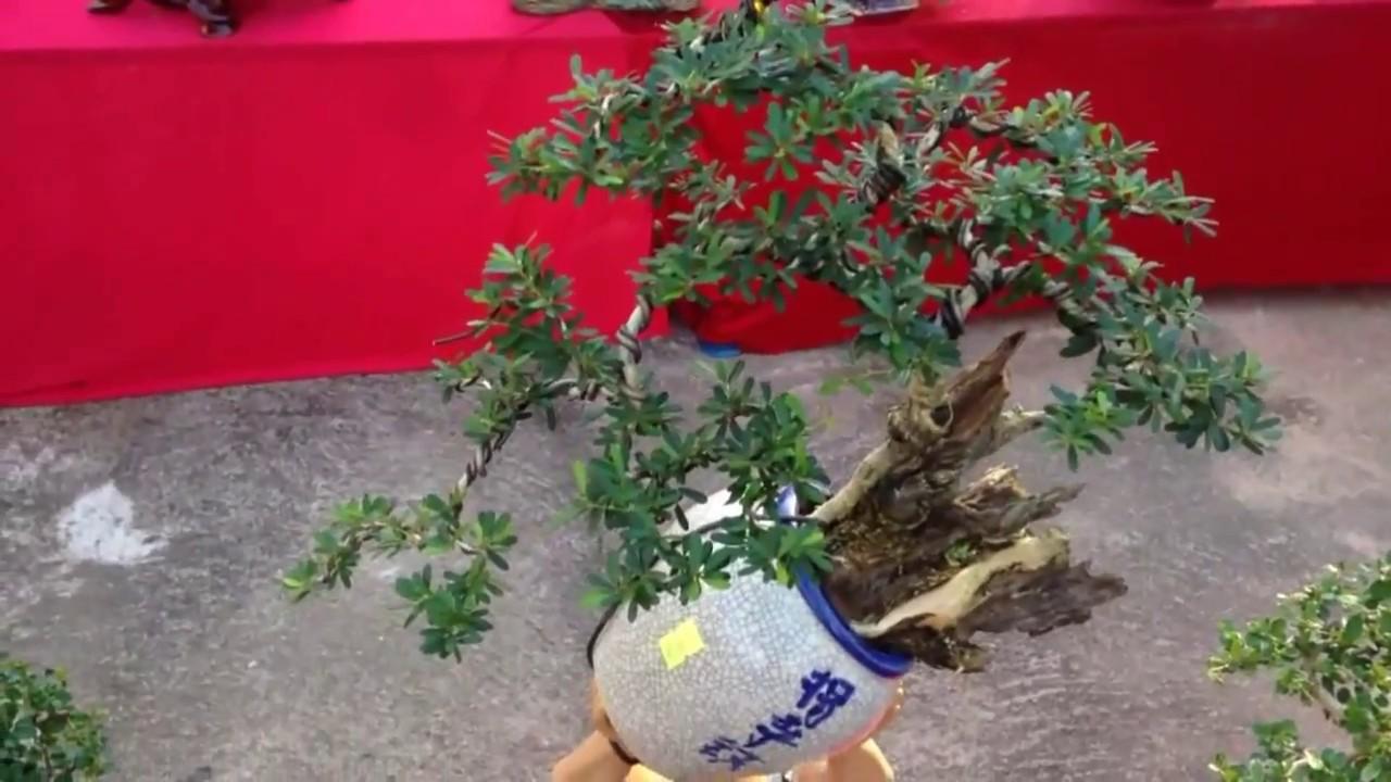 Quá chất những cây này - Bonsai Binh Dinh