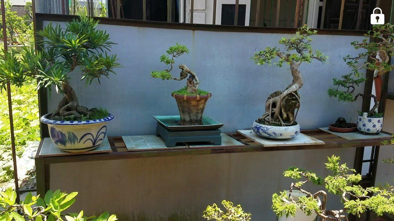 SH.1317.Anh ấy báo giá Bonsai tại vườn thật hợp lý. Lê văn Sĩ.Kiến an.Hải Phòng.