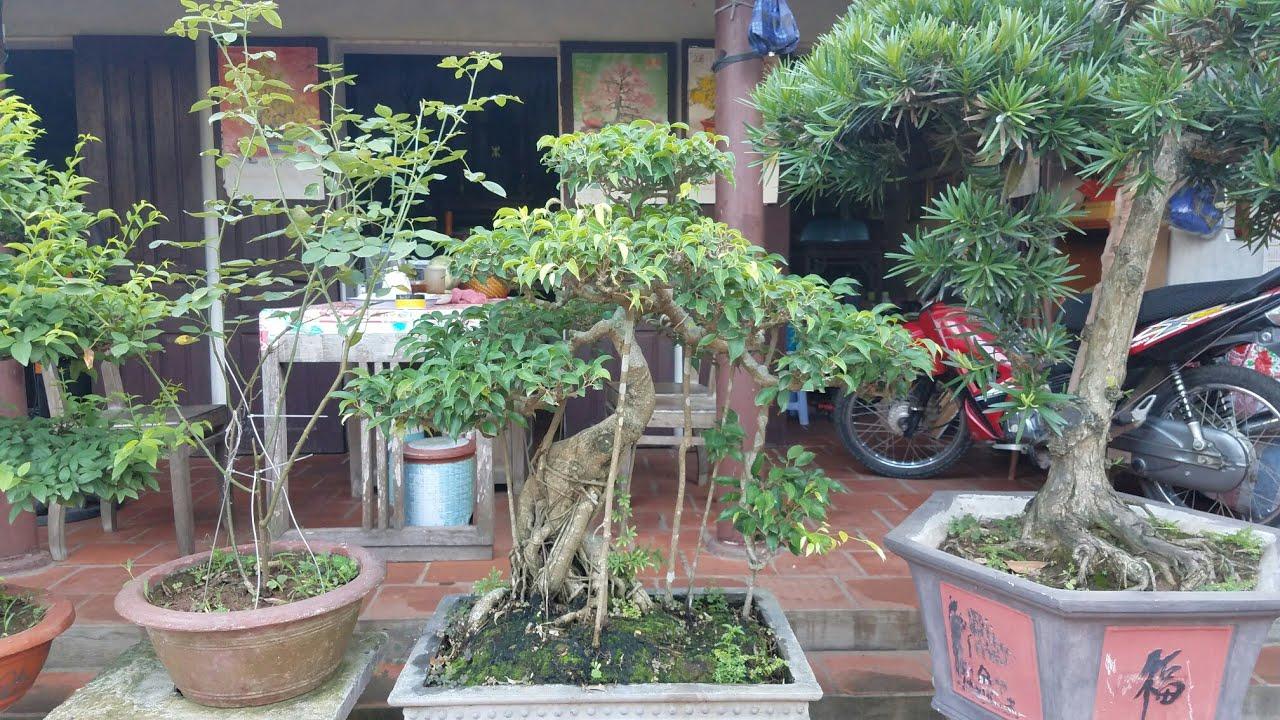 SH.1443.Say mê cây cảnh nhiều năm nay và tạo dựng được vườn Hoa Lan quí.Ông LêTiếnThục.Ba vì.Hà nội.