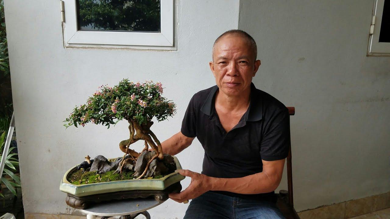SH.3113.Báo giá 12tr cây Hồng Ngọc Mai của ông Huynh văn  giang.Hưng Yên.