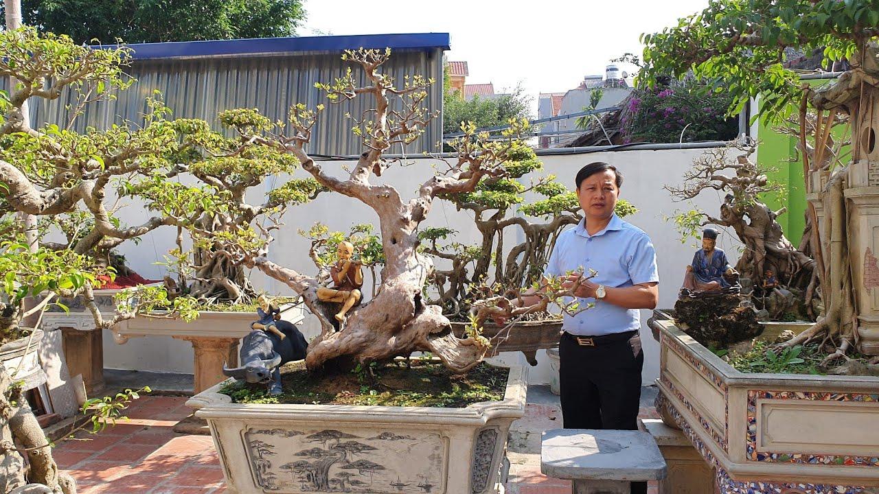 SH.3274.Ngỡ ngàng trước cây Ổi đặc biệt vườn cảnh anh Nguyễn Sỹ Quý. Sóc Sơn. Hà Nội.