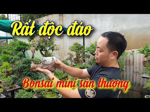 SH.4297. Bất ngờ trước vườn có tới cả ngàn cây bonsai mini sân thượng rất đẹp giữa thủ đô Hà Nội.