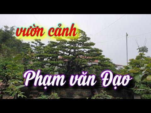 SH.5021. Thăm vườn cảnh ông Phạm văn Đạo xóm 34 xã Hải Minh Hải Hậu Nam Định.