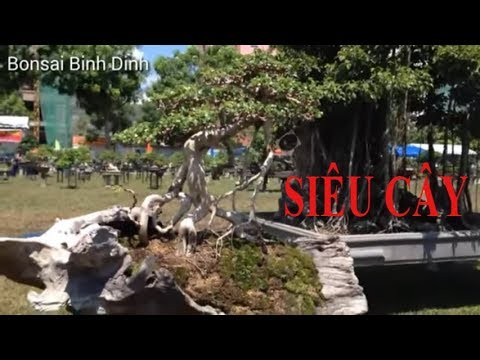 SIÊU CÂY TẠI TRIỂN LÃM  - Bonsai Binh Dinh