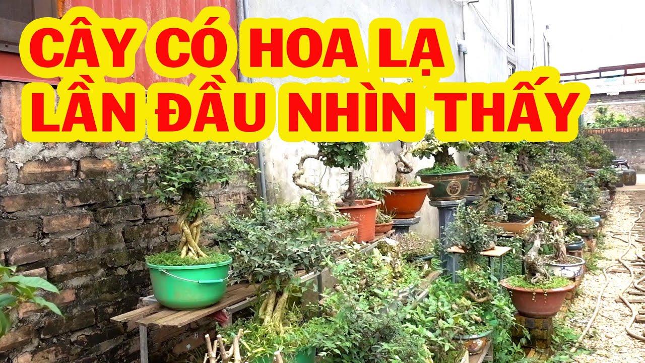 Sanh Nam Điền giảm giá tới đáy, báo giá nhiều cây đep, tùng la hán, mai chiếu thủy, bông trang, ổi