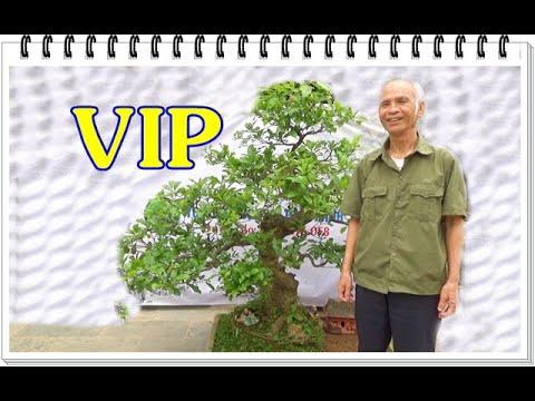 Tác phẩm LỘC VỪNG  VIP, phôi sanh Nam Điền trực hoành đẹp. ĐT: 0337496058, ngày 18/3/2021
