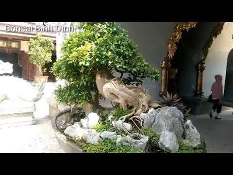 Tác phẩm cừa quá chất - Bonsai Binh Dinh
