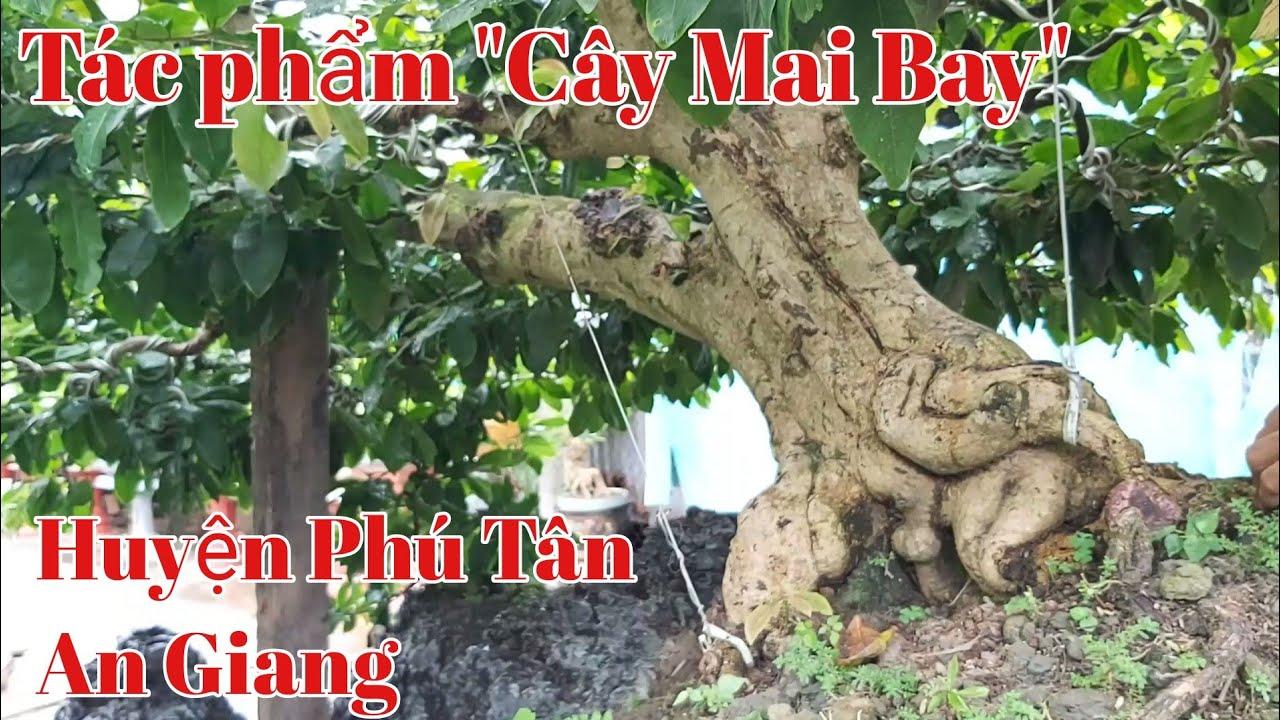 """Tác phẩm nghệ thuật """"Cây Mai Bay"""" đẹp tại huyện Phú Tân AG gặp A phong 0989750505 ngày 9/8/2020."""