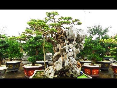 Tác phẩm thạch thụ tương sinh vườn Huy Gỗ TP Nam Định