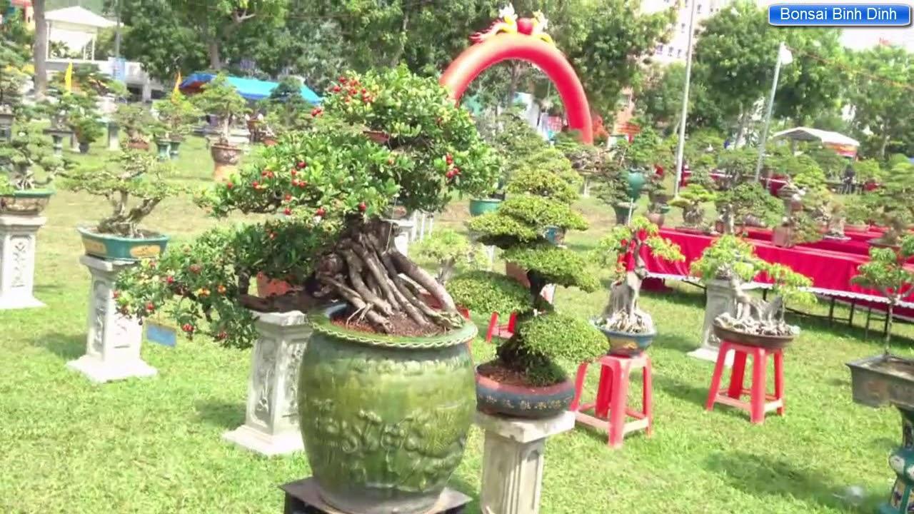 Tập trung nhiều cây đẹp ở đây - Bonsai Binh Dinh