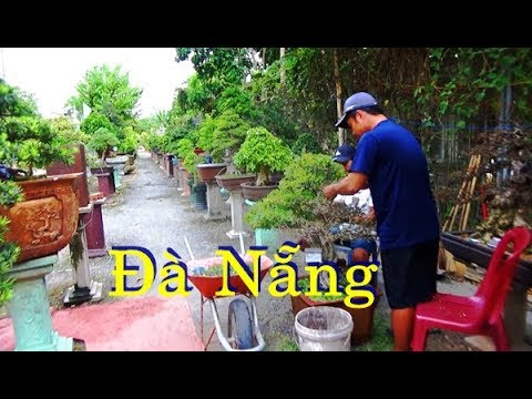 Thử xem cây Đà Nẵng có khác cây Hà Nội không ?