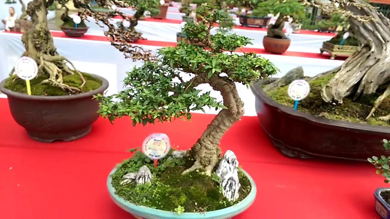 Tôi bị cuốn hút với vẻ đẹp dàn cây Bonsai này - Bonsai Binh Dinh