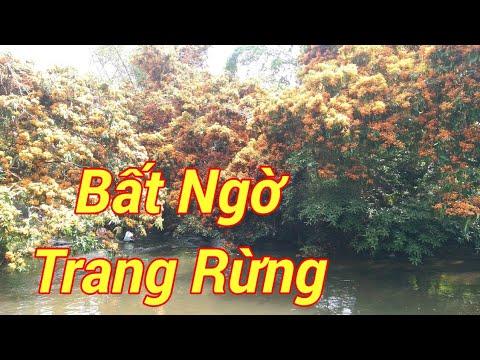 Trang Rừng tại Suối Tà Má, Làng Hà Ri,  Vĩnh Hiệp, Vĩnh Thanh