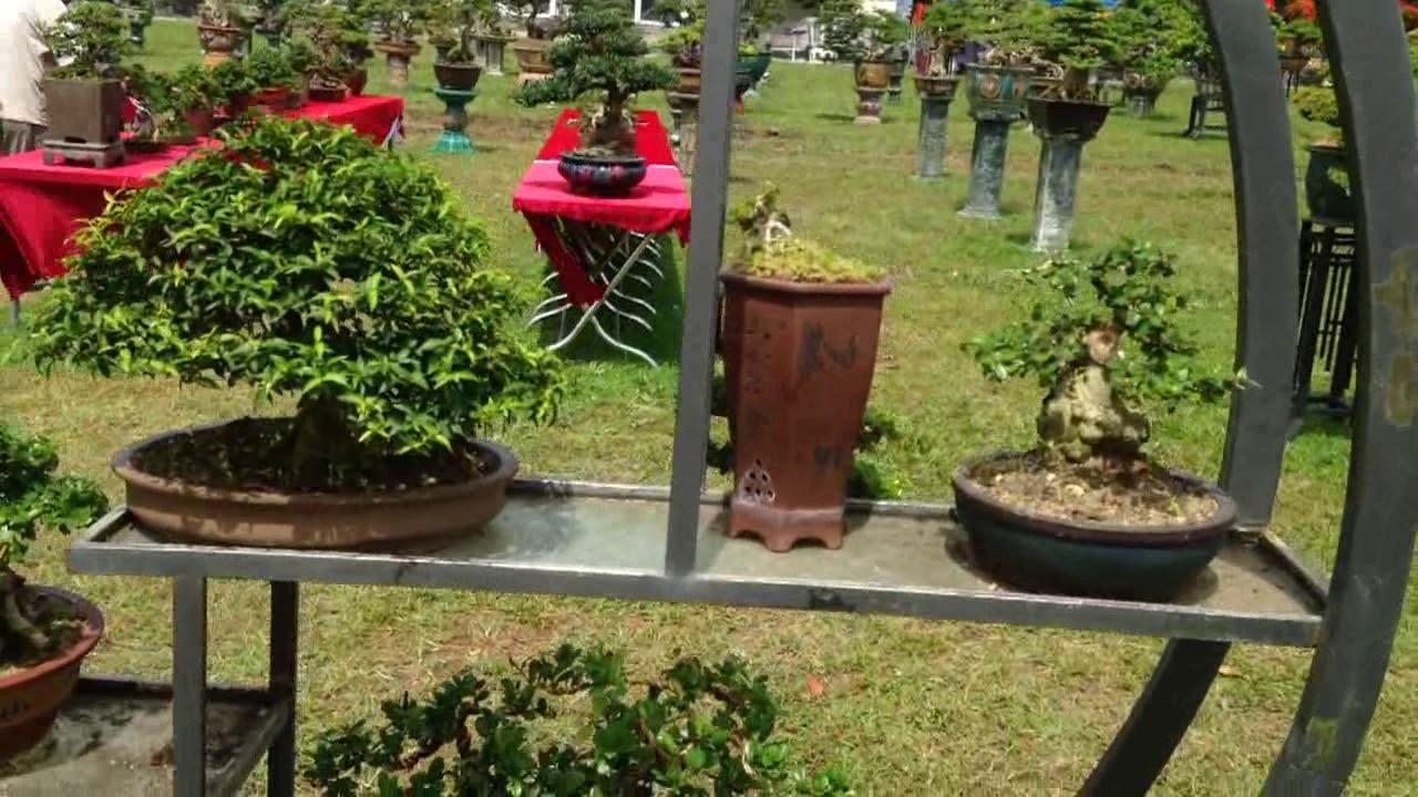Triển lãm bonsai Bình Định 29