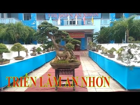 Triển lãm sinh vật cảnh An Nhơn, Bình Định Phần 1 - Bonsai Binh Dinh