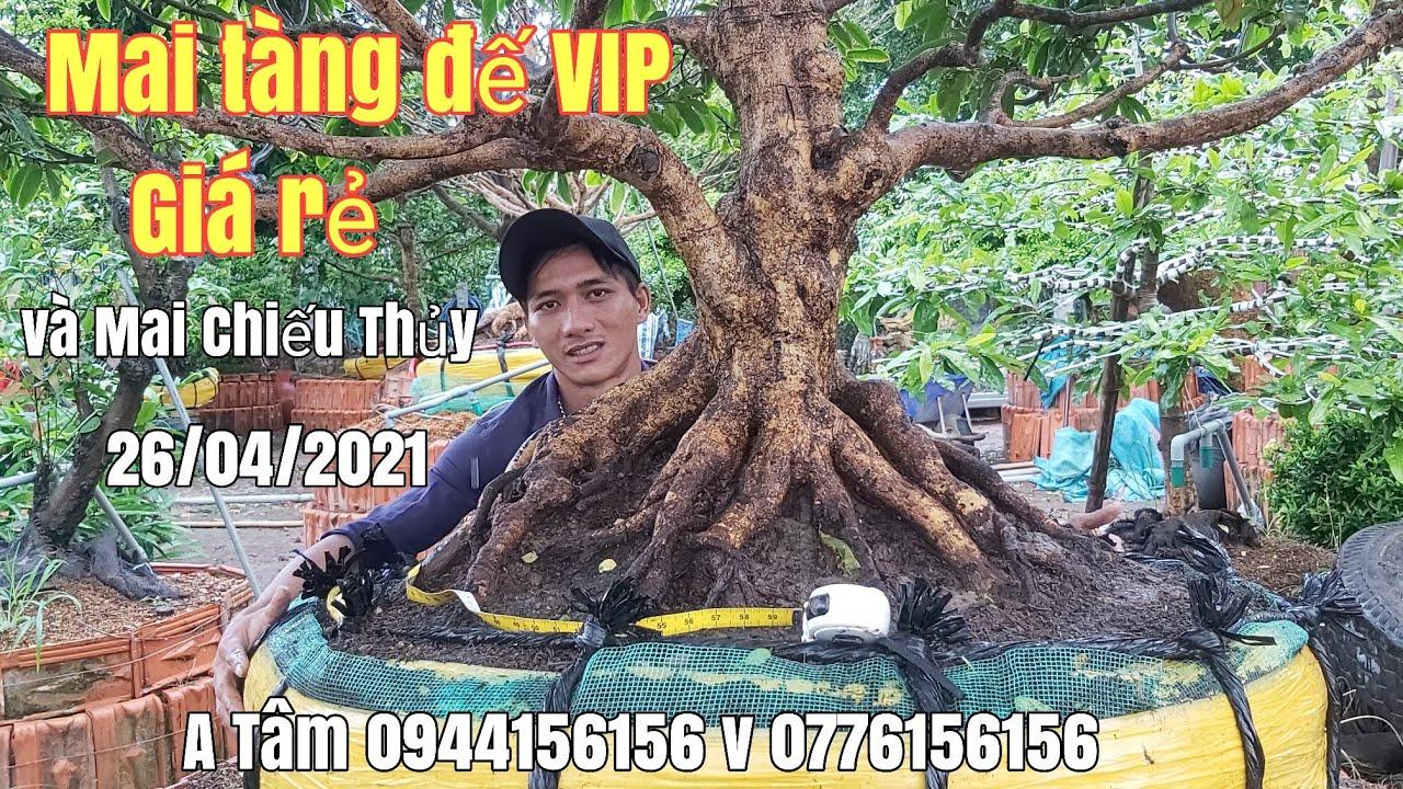 Xuất hiện cây Mai đế VIP chi cành đẹp , một cốt và cây Chiếu Thủy giá hữu nghị gặp A Tâm 0944156156