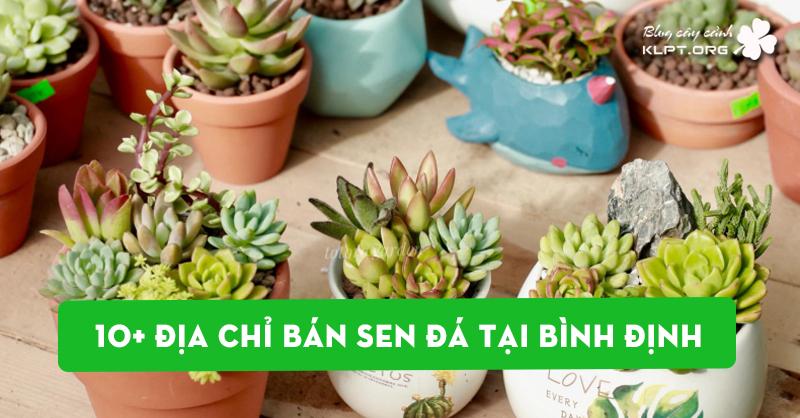 10-dia-chi-ban-sen-da-tai-binh-dinh