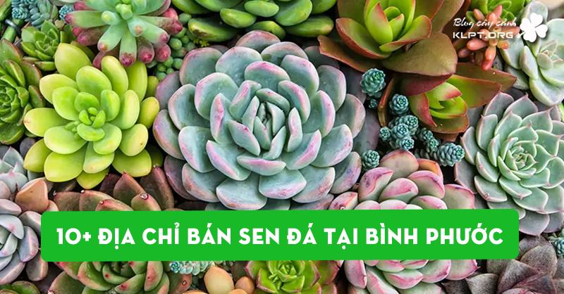 10-dia-chi-ban-sen-da-tai-binh-phuoc-dep-nhat
