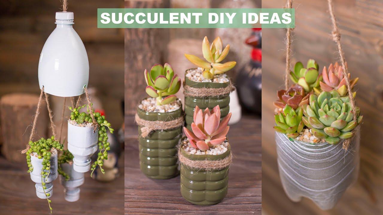 6 Succulent DIY Ideas & Plastic Recycling| Tái chế chai nhựa trồng sen đá| 多肉植物| 다육이들 | Suculentas