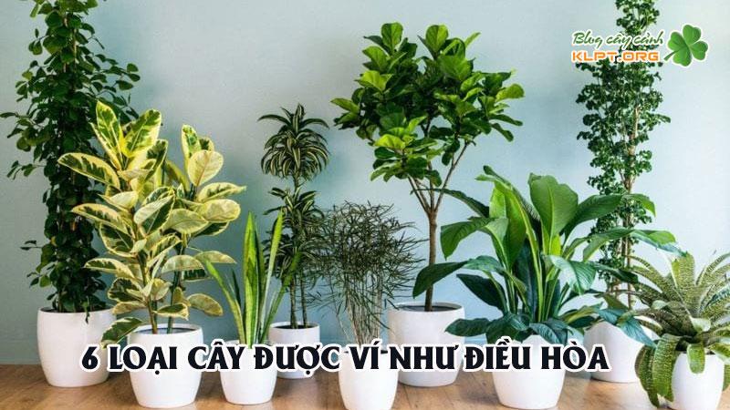 6-loai-cay-duoc-vi-nhu-dieu-hoa-co-the-giam-toi-10-do-ma-khong-ton-1-xu-0-KLPT