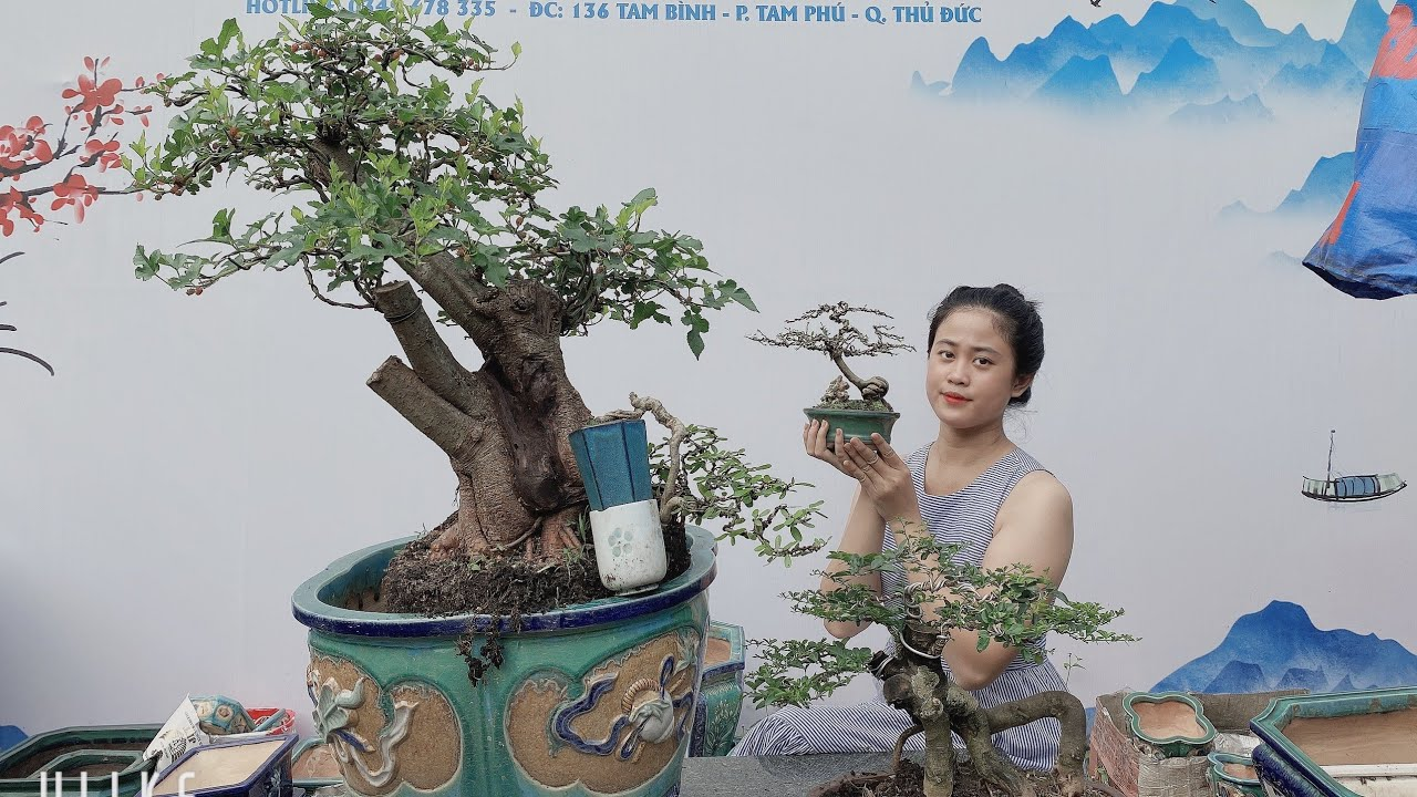 Pan City 271| Bonsai mini giao lưu ship cod toàn quốc giá sinh viên - xin cảm ơn anh em !!!