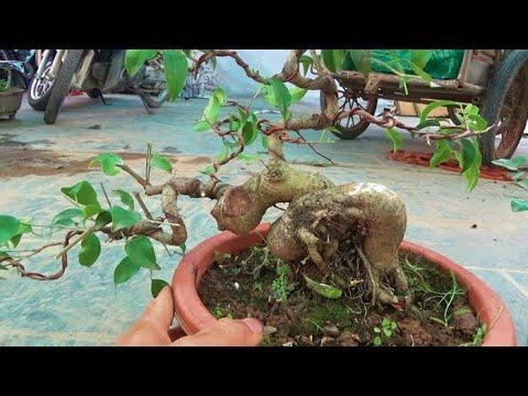Sanh Nam Điền, giá hiền hòa, ngày 18/5, ĐT: 0337496058