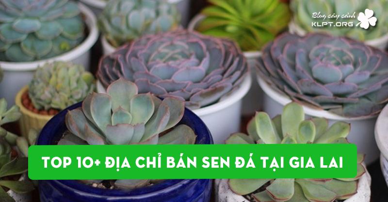 bo-tui-ngay-10-dia-chi-ban-sen-da-tai-gia-lai
