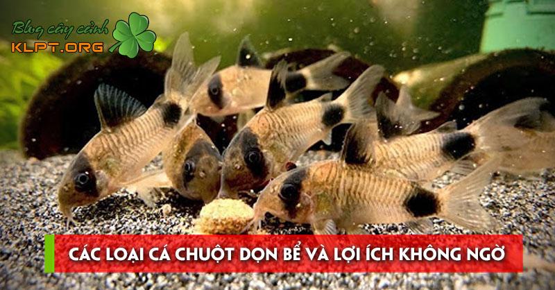 cac-loai-ca-chuot-don-be-va-loi-ich-khong-ngo-cua-chung